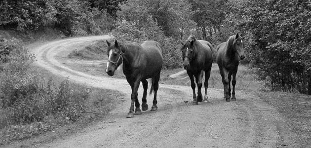Лошадью ходи. Часть 11